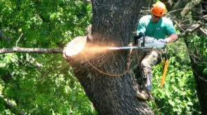 tree trimming and removal fulerton ca